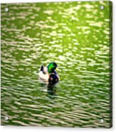 Green Head Acrylic Print