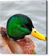 Green Head Acrylic Print