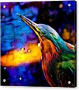 Green Heron In Dramatic Hues Acrylic Print