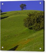 Green Hill With Poppies Acrylic Print