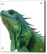 Green Iguana 1 Acrylic Print