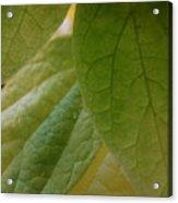Green In Vein Acrylic Print