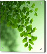 Green Is The Colour Acrylic Print