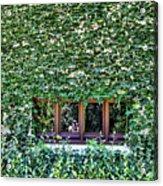 Green Ivy Window  Acrylic Print