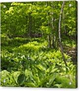 Green Landscape Of Summer Foliage Acrylic Print