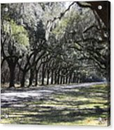 Green Lane With Live Oaks Acrylic Print