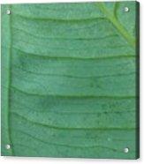 Green Leaf 2 Acrylic Print