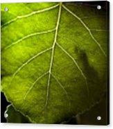 Green Leaf Detail Acrylic Print