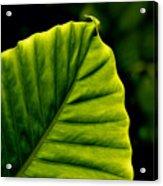 Green Leaf Acrylic Print