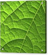 Green Leaf Structure Acrylic Print