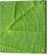 Green Leaf Texture Acrylic Print