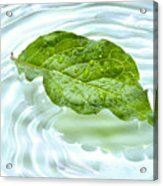 Green Leaf With Water Reflection Acrylic Print