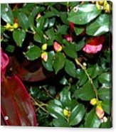 Green Leafs And Pink Flower Acrylic Print
