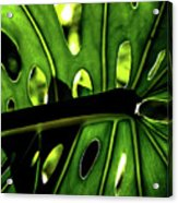 Green Leave With Holes Acrylic Print