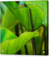 Green Leaves At Cantigny Acrylic Print