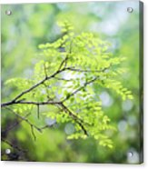 Green Leaves In The Forest Acrylic Print