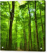 Green Light Harmony - Walking Through The Summer Forest Acrylic Print