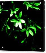 Green Light Star Acrylic Print