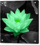Green Lily Blossom Acrylic Print