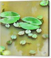 Green Lotus Leaf In The Lake Acrylic Print
