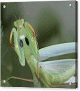Green Mantis With Garden Background Vector Acrylic Print