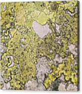 Green Moss On Rock Pattern Acrylic Print