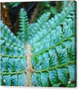Green Nature Forest Fern Art Print Baslee Troutman  Acrylic Print