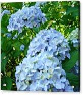 Green Nature Landscape Art Prints Blue Hydrangeas Flowers Acrylic Print