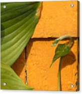 Green On Orange 4 Acrylic Print