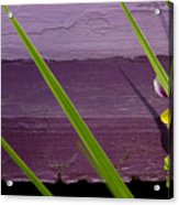 Green On Purple 6 Acrylic Print
