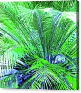 Green Palm Acrylic Print