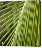 Green Palm Leaf Acrylic Print