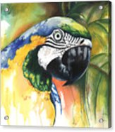 Green Parrot Acrylic Print by Anthony Burks Sr