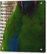 Green Parrot Acrylic Print