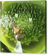 Green Pool Acrylic Print