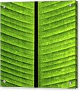 Green Ribs Acrylic Print