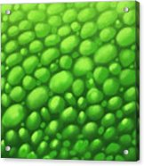 Green Scales Acrylic Print
