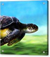 Green Sea Turtle 2 Acrylic Print