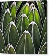 Green Spines Acrylic Print