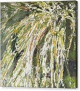 Green Reeds Acrylic Print