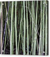 Green Sticks Acrylic Print