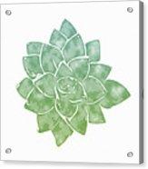 Green Succulent 1- Art By Linda Woods Acrylic Print
