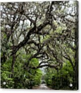 Green Swamp Oak Bower Acrylic Print