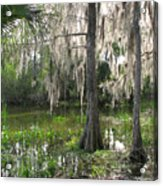 Green Swamp Acrylic Print