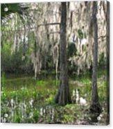 Green Swamp Acrylic Print