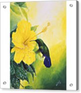 Green-throated Carib Hummingbird And Yellow Hibiscus Acrylic Print