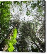 Green To The Sky Acrylic Print