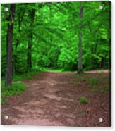 Green Trail Acrylic Print
