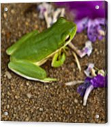 Green Tree Frog And Flowers Acrylic Print