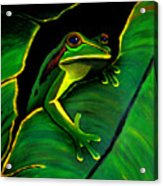 Green Tree Frog And Leaf Acrylic Print